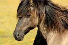 horse-nature-animals-meadow-56879.jpeg
