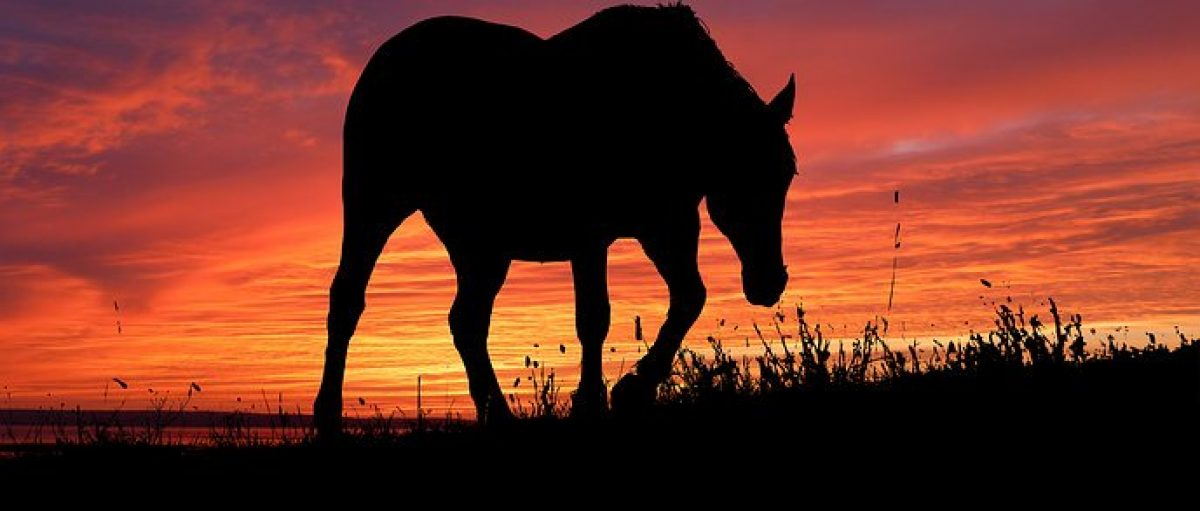 Wilderness – Mustangs